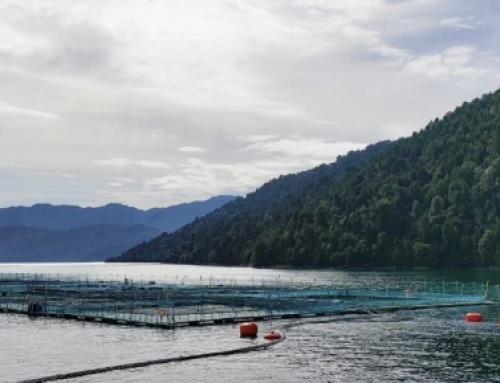 SMA activa protocolo para incentivar el cumplimiento ambiental en la industria acuícola ante pandemia del coronavirus